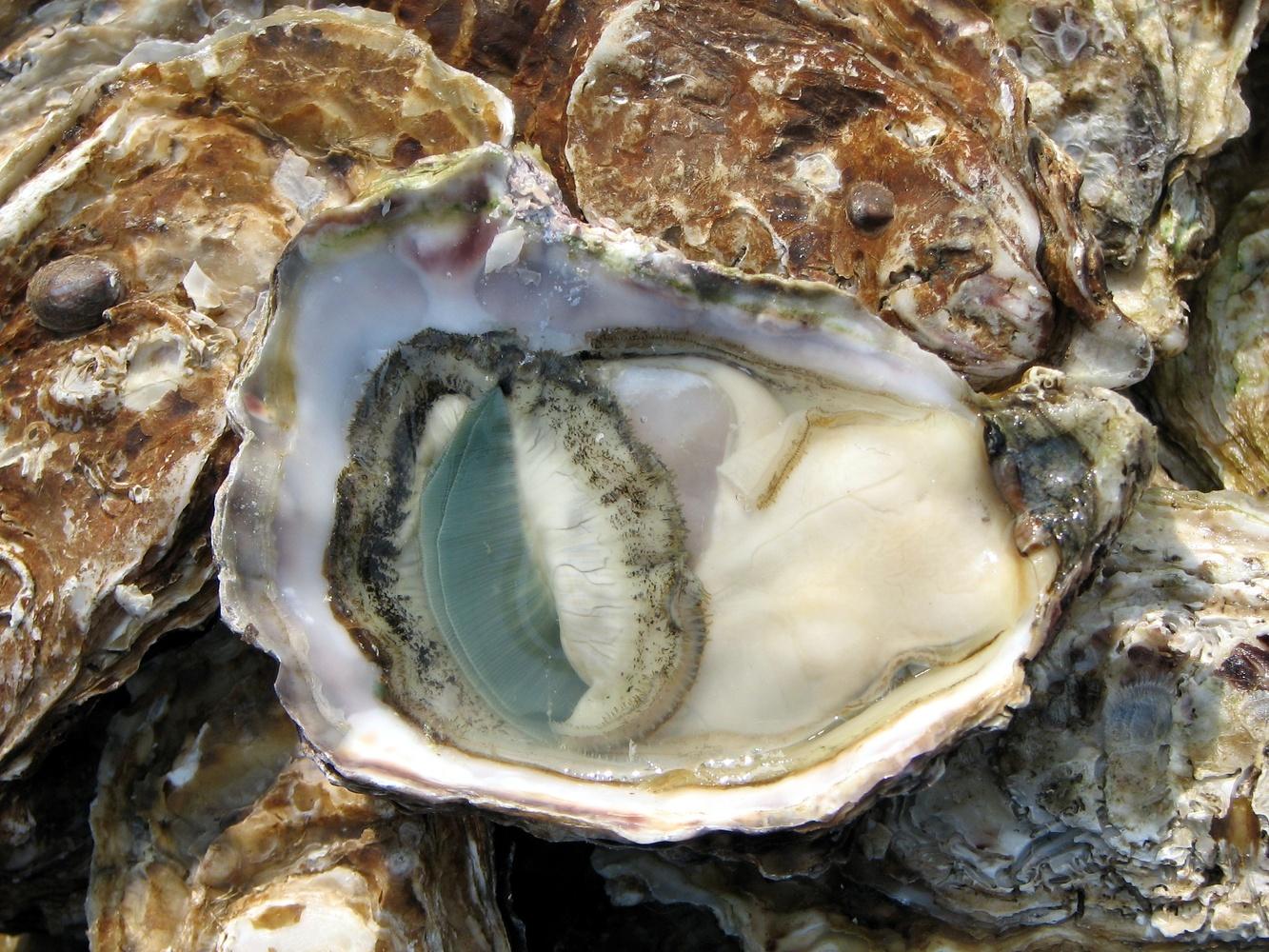 Open oyster on a market in Lyon