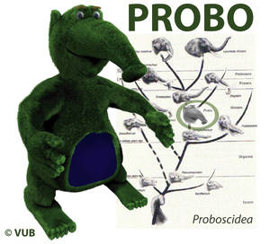 Probo and his family tree