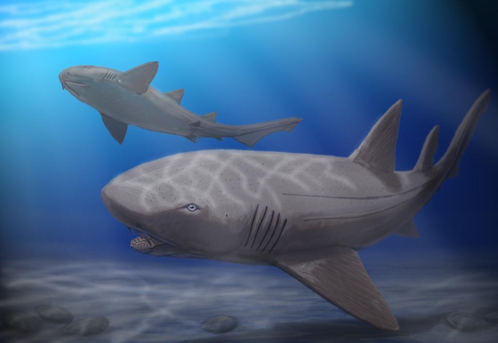 Artist's impression of Ptychodus mortoni - a giant durofagous shark from Late Cretaceous