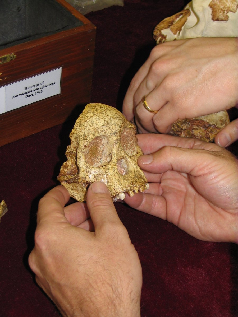 The face of the Taung Child