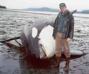 Bruce Wright with a dead killer whale