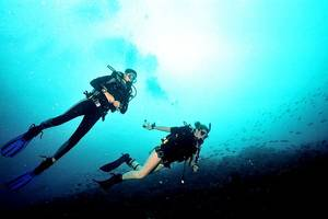 Coral Cay divers