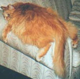 Fat_lazy_cat_photo
