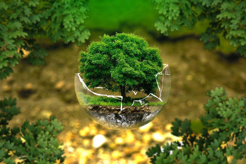 Bonsai tree in a broken glass sphere