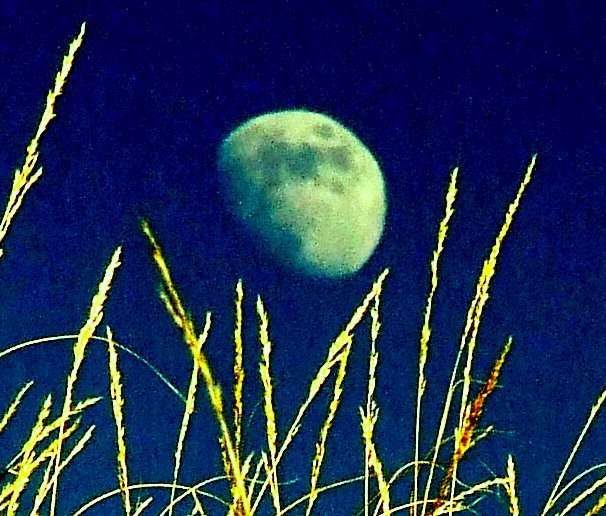 THe moon shining over some grass