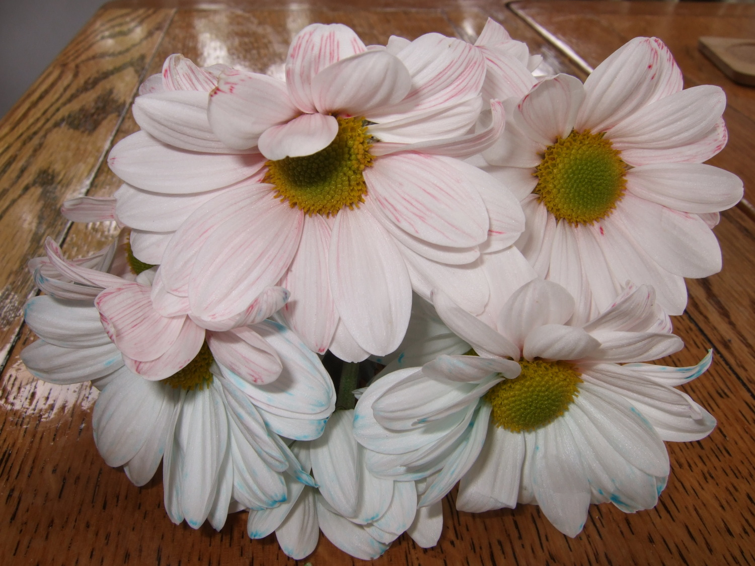 Colour your own flowers experiments naked scientists multicoloured flowers mightylinksfo