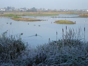 London Wetland in Winter