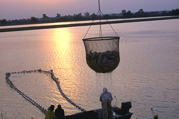 The pros and cons of aquaculture interviews naked for Fish farming pros and cons