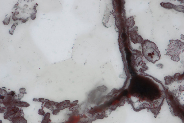 Haematite filament attached to a clump of iron in the lower right, from hydrothermal vent deposits in the Nuvvuagittuq Supracrustal Belt in Québec, Canada. These clumps of iron and filaments were microbial cells and are similar to modern microbes found