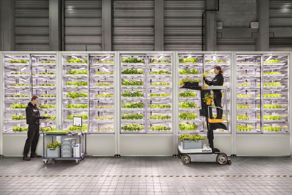 In the future, produce could be grown directly in supermarkets or restaurants.