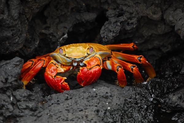 crab in rocks