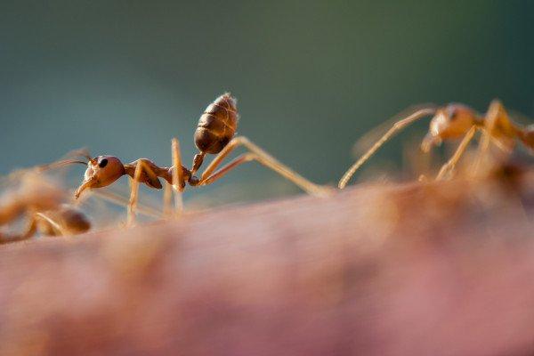 An ant walking