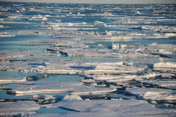 Sea ice is affected by water temperature while the Greenland ice sheet responds to atmospheric temperature rises.