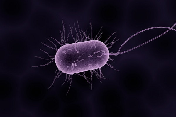 Are there any single-cell organisms that eat multi