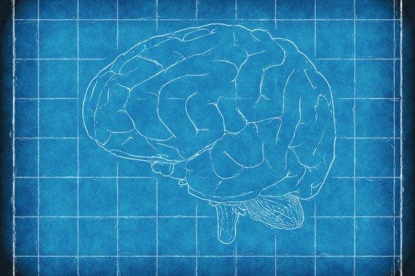 Brain schematic