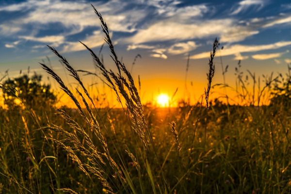 The image shows a field at sunset.