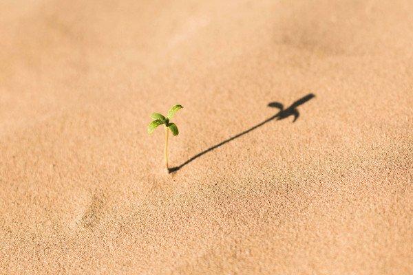Plant shoot