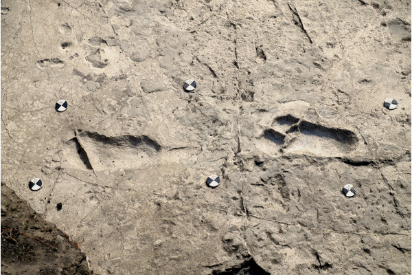 Fossilised Australopith footprints in Laetoli, Tanzania from 3.66 million years ago.