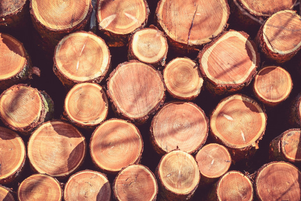 DNA analysis and near-infrared scanners could help customs officers identify illegally traded wood.