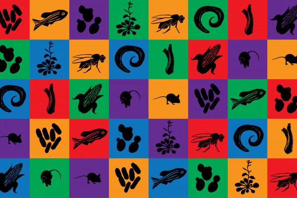 Model organism mosaic