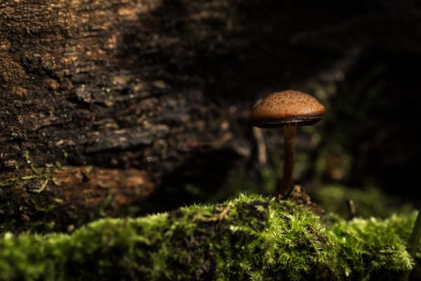 A mushroom growing on some bark.