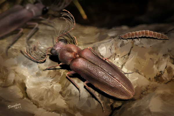 Artist's impression of a prehistoric bioluminescent Cretophengodes beetle.