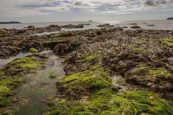 Mud coastline with seaweed