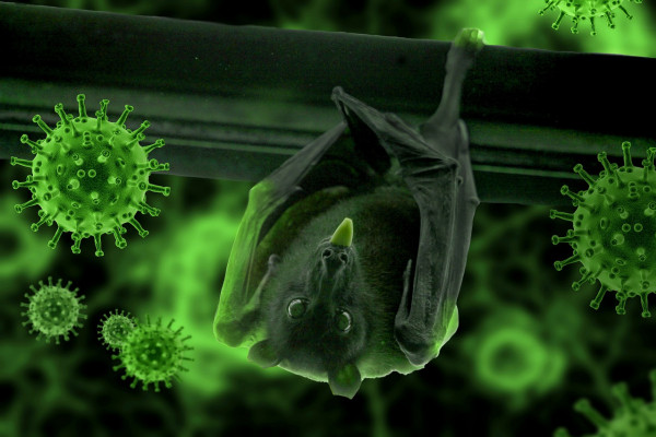 A bat hanging from a wooden beam surrounded by green coronavirus particles.
