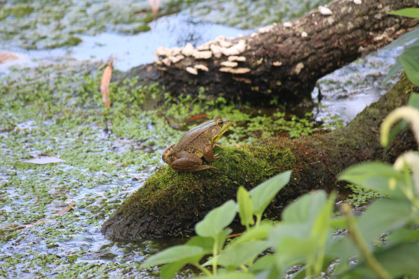 A frog sitting in a swamp