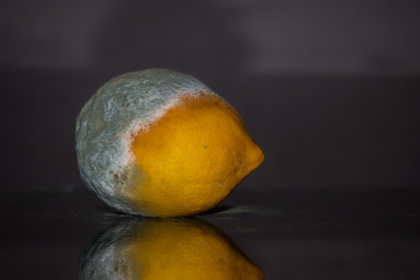 A lemon half covered in mould.