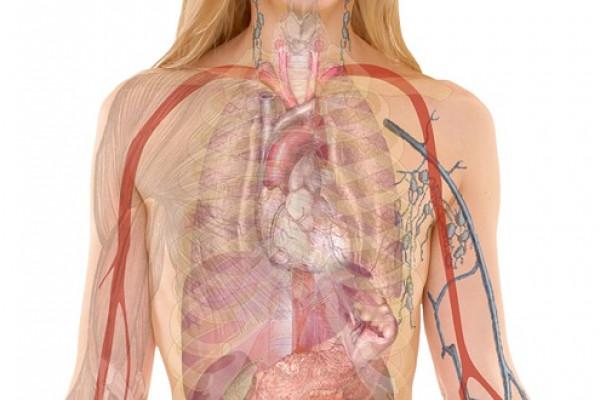 human body image