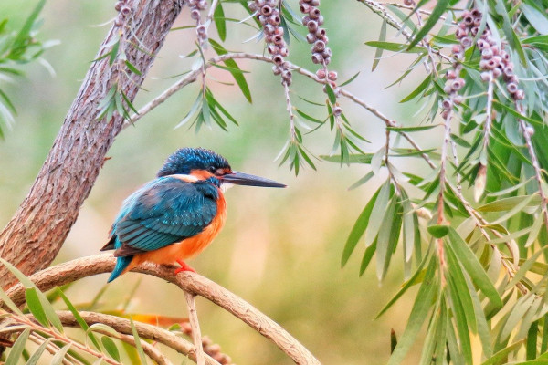 A kingfisher perched on a branch.