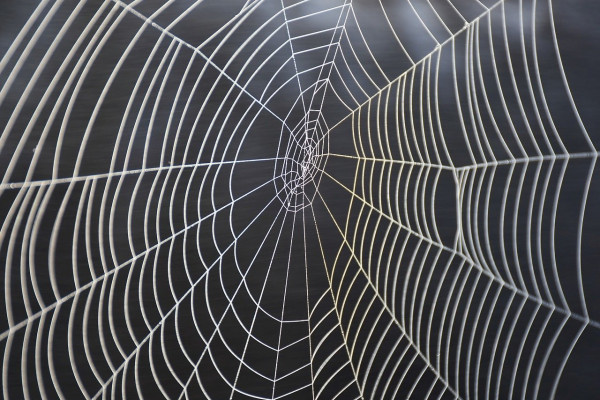 A spider's web