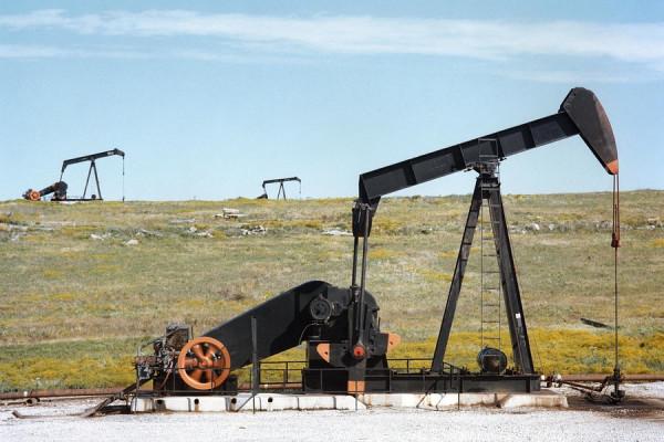 A field of oil pumpjacks.