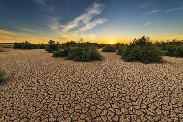 Some bushes in a dry desert landscape.