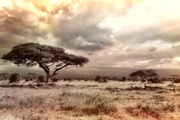 A savannah landscape.
