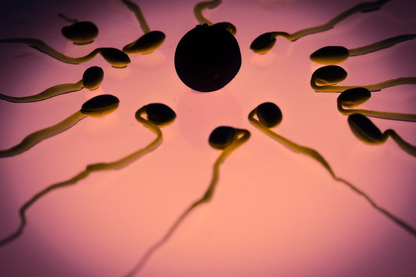 Sperm swimming towards an egg cell.