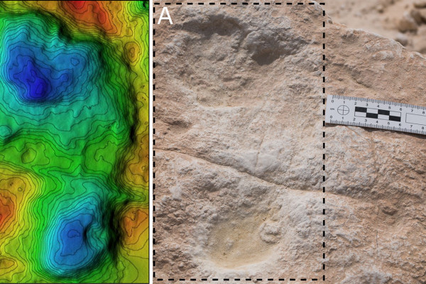 Ancient human footprints discovered in the Arabian Peninsula.