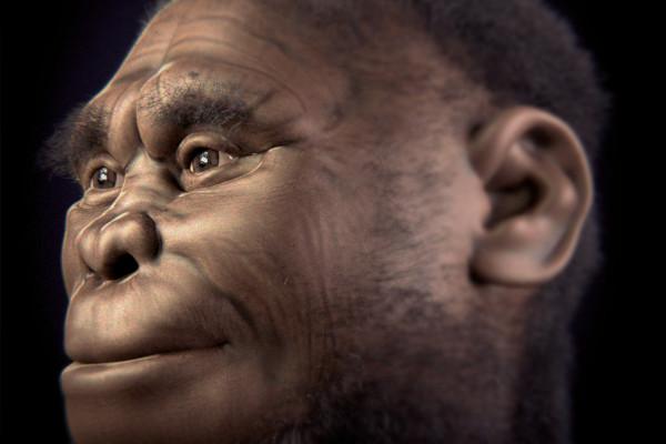 Reconstruction of female Homo floresiensis