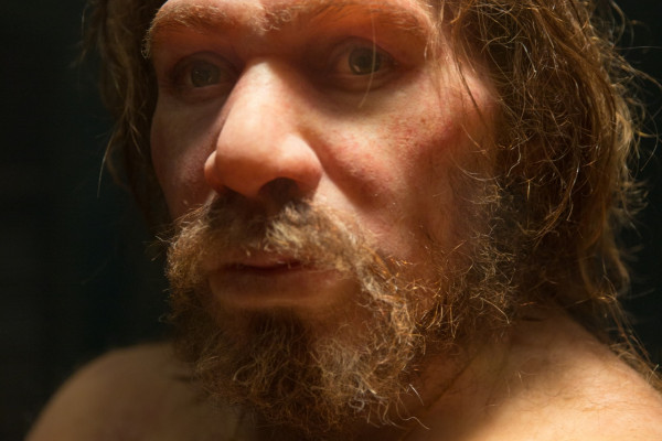 A portrait of a neanderthal in a museum.