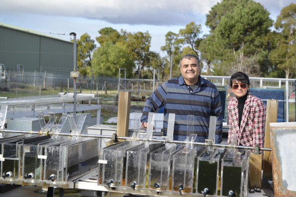 Navid Moheimani and Parisa Bahri are developing algal systems to turn wastewater into valuable food resources
