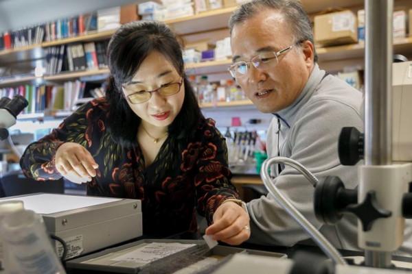 FOXG1 researchers Soo and Jae Lee.