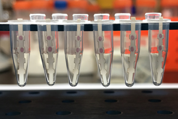 Dipstick test for Zika and dengue viruses