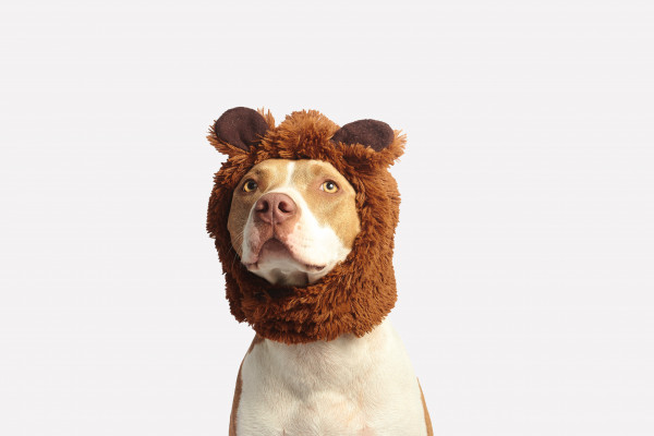 Dog with Lion Hat