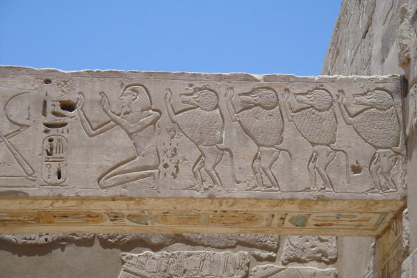 Baboon hieroglyphs