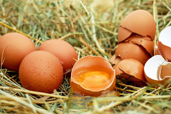 Chicken's eggs