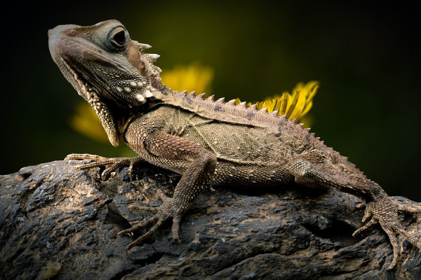 Reptile resting on stone