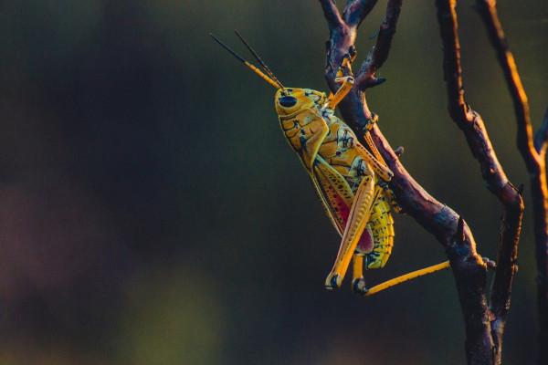 A cricket.