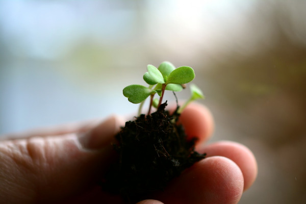 someone holding a seedling