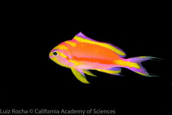 colourful fish in deep sea